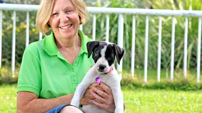 Friends of The Pound vice president and animal carer Pam Price at home with Sage the baby Great Dane Cross.