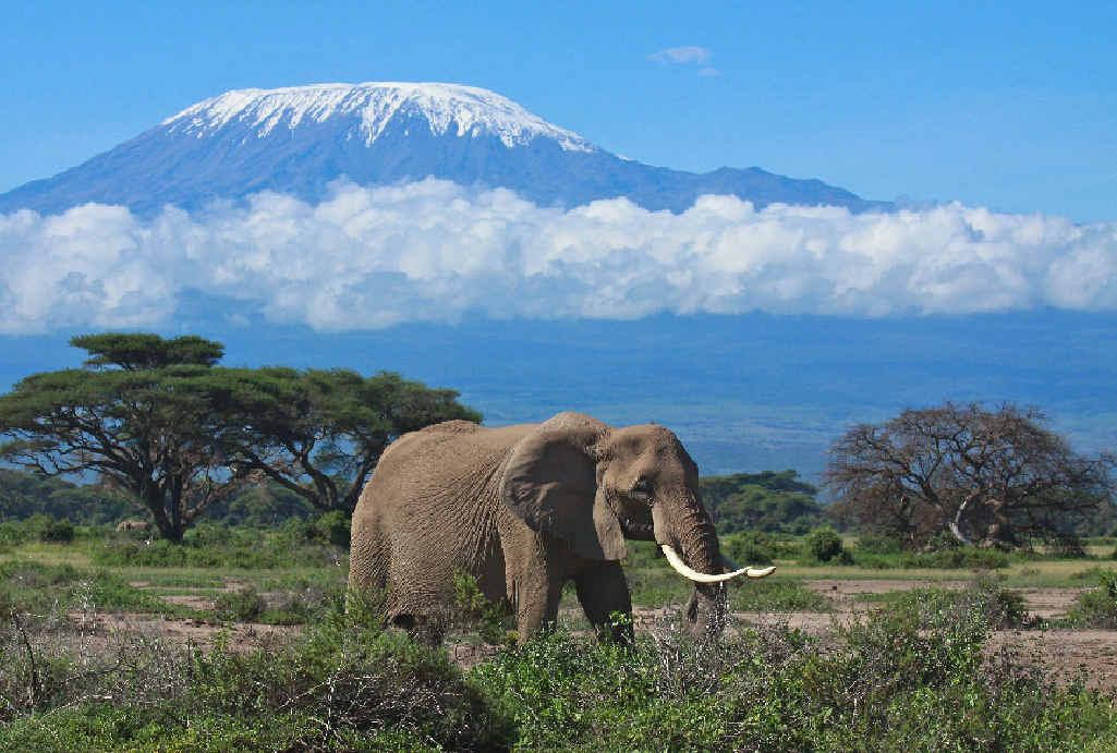 Mount Kilimanjaro in Africa is the largest free-standing mountain in the world.