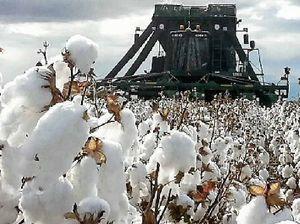 Cotton giant Cubbie Station to build $30m cotton gin
