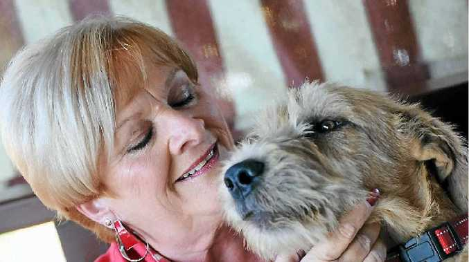 PLEA: Gladstone Friends of RSPCA president Judy Whicker with Sergeant.