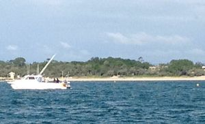 First photos in from a whale rescue happening off Noosa Main Beach.