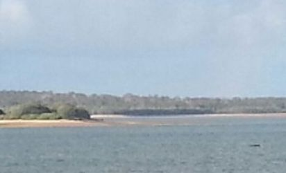 The speck in the bottom right corner of the photo is a whale seen in a rare sighting from the Urangan marina.