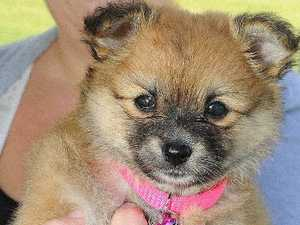 Pet registration tags will be distributed in the coming weeks
