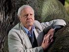 CQ tourism groups want Sir David Attenborough back