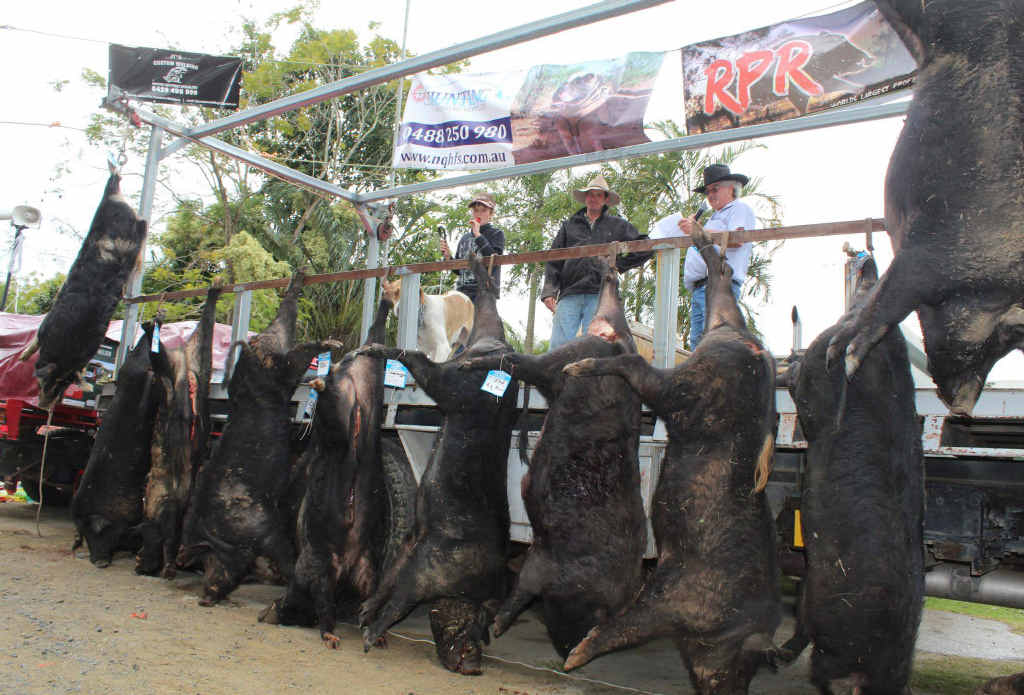 At least 70 feral pigs were caught during the Pinnacle Big Boar Competition, held over the weekend.