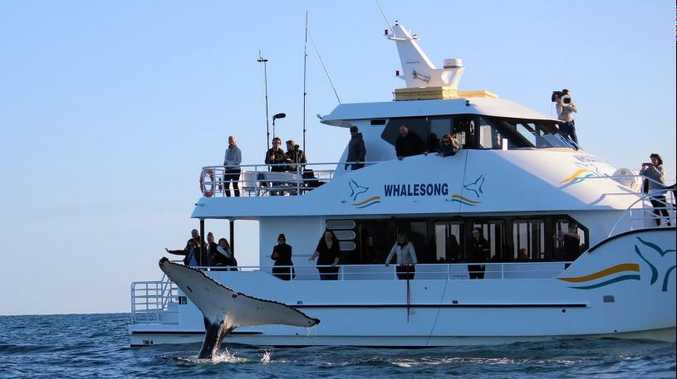 Hervey Bay whale watching operators have been commercially disadvantaged by the changes, Shadow Minister for Small Business Jackie Trad says.