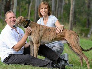 $595,000 Glen Gallon is greatest greyhound in the world