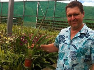 Nursery owner with 35 years experience to talk about orchids