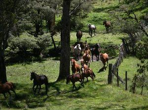 Horse around this Australia Day