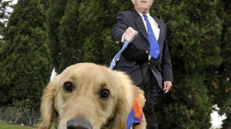 Volunteer Ken Stephen from the Toowoomba and District Masonic Council with Saxon the Guide Dog in training.