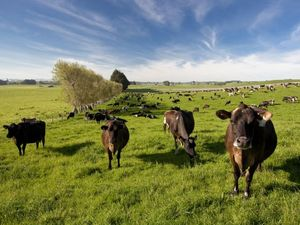 Fonterra confirms French compo talks