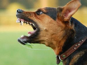 Tougher pet rules on way