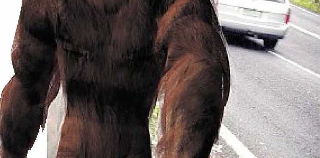 HAIRY MOMENT: A Lismore resident claims he spotted a Yowie looking like this near Bexhill in June.