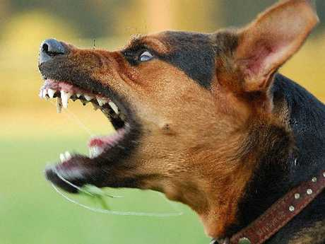 DOG ATTACK: A dog owner attacked a woman who was defending her daughter from her pet.