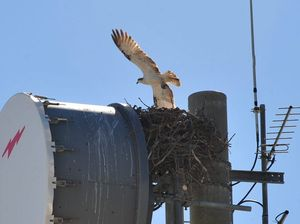 Eagle soars to reclaim tower site