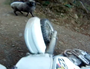 Angry ram charges trail bike rider