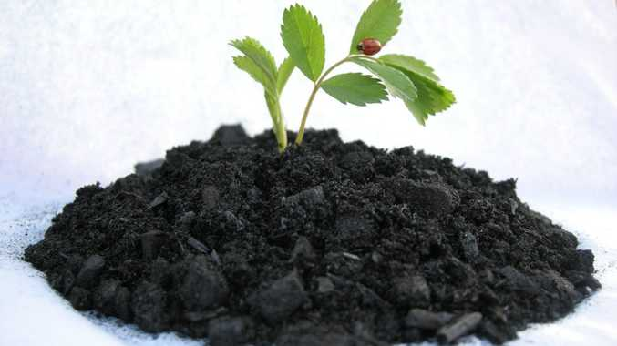 Biochar is considered a potentially important soil additive in fighting climate change.