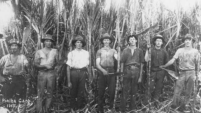 The Pialba cane-cutting gang in 1913.