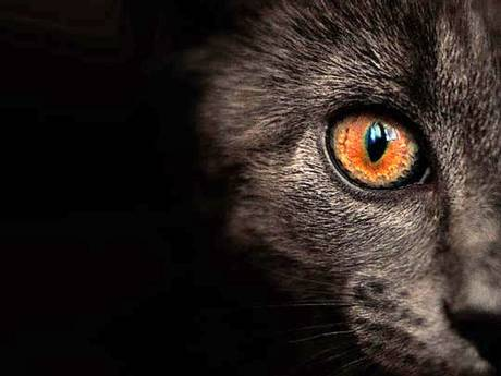 Toowoomba Regional Council will today consider scrapping  mandatory cat registration.