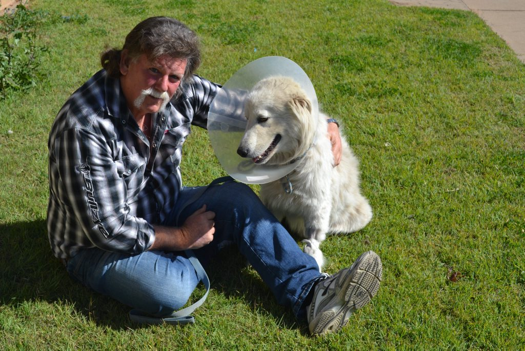 Cameron Young wants justice for Beau who was senselessly attacked while his owners were away. Photo Emma Heron / Chinchilla News