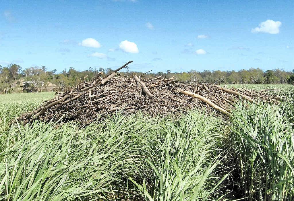 The January floods have left debris in many cane paddocks hampering efforts at harvesting.