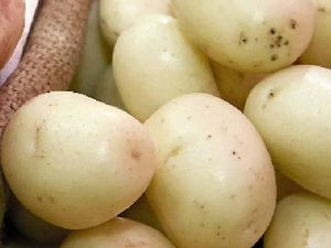 Potato is still favourite for Aussies