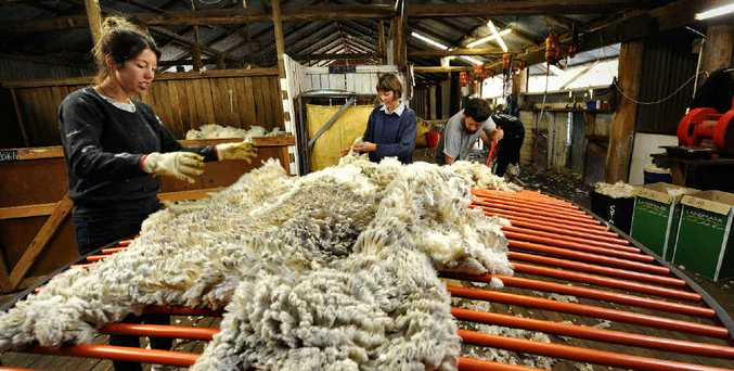 HARD YAKKA: Emily Saunders, Cathy Smith and Jake Young were hard at work in the Smith's shearing shed at Allum Rock.