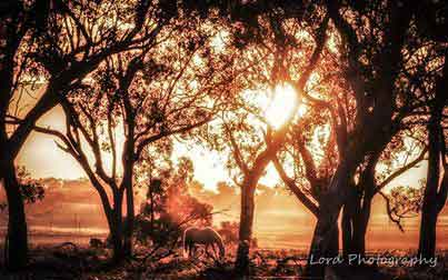 The cold weather has returned to the Darling Downs this week. Lord Photography captured this stunning winter's morning at Kingsthorpe.