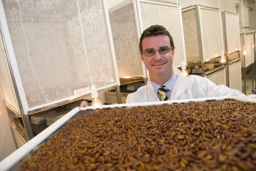 Biological pest control company AgBiTech CEO Anthony Hawes with insect larvae.
