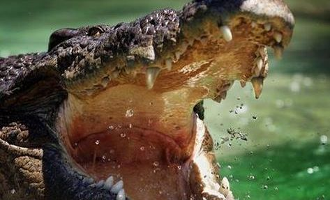 A man has fought off crocodiles near Darwin using spanners and spark plugs.