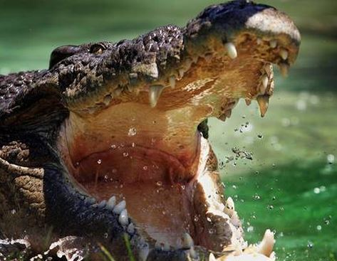 CROC WARNING: Authorities will place croc warning signs along the Boyne River in Tannum Sands and Boyne Island this afternoon after a croc was spotted.