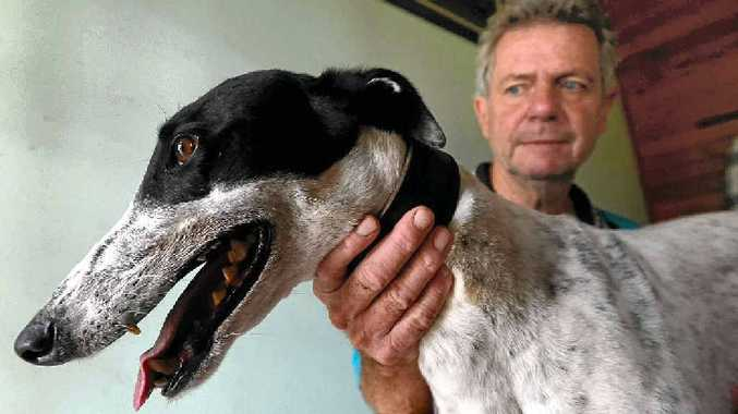 CHAMP: Stratheden's Allan Lang, with his beloved charge Paw Licking. The dog has since become a top performer and narrowly missed out on a $75,000 top prize at the weekend.