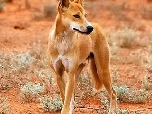 Landholders given the tools to tackle wild dog problem