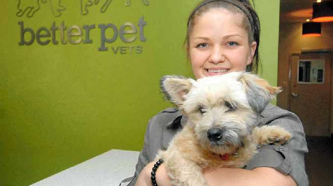 Vet nurse Helina Toivanen cuddles shitzu-cross puppy Bentley, who was lucky to survive after he was struck down by a paralysis tick.