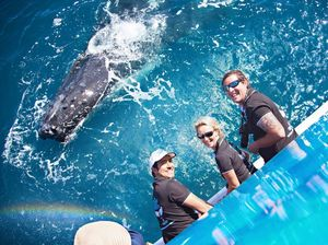 Whale industry injects $12-20m into economy, not $60-80m