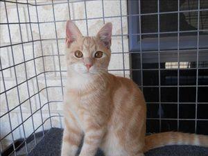 Kitties on offer at Cat Adoption Day on September 1
