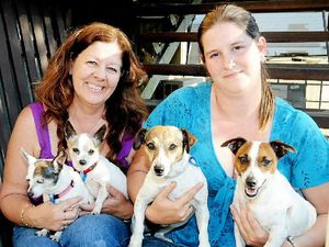 Pet rego 'too costly'