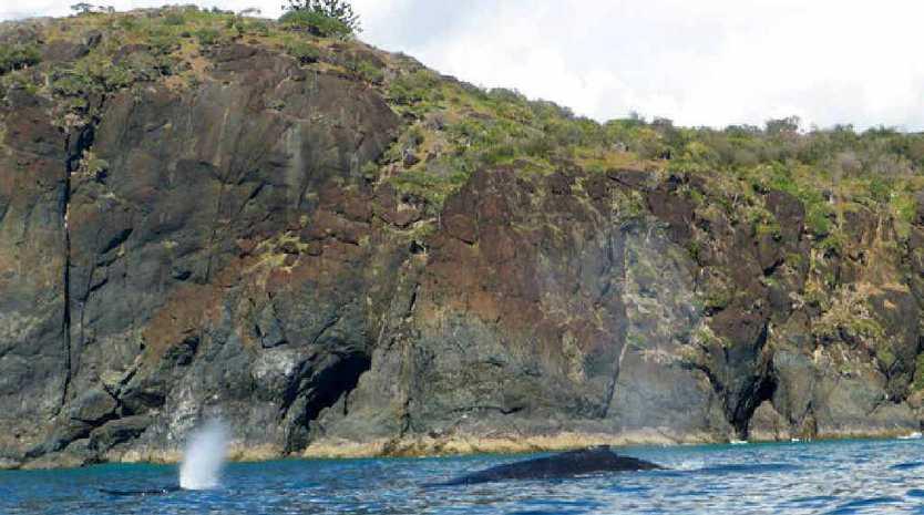 CLOSE ENCOUNTER: Rainbow Beach Dolphin View Kayak tour took this photo of whales.