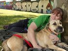 Adopted canines on parade to showcase RSPCA successes