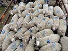 Livestock exports perform well despite drought and debts