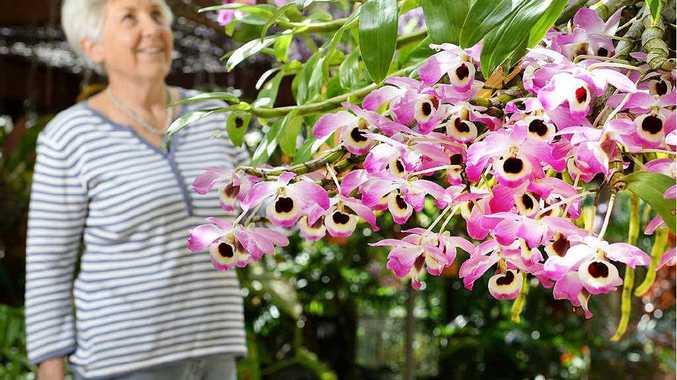 OPEN GARDEN: Jan Flanigan in her Mt Crosby garden, which is open to the public this weekend.
