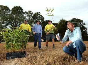 Tree planting day to restore biodiversity at Pottsville