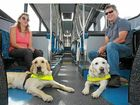 INDEPENDENCE DAY: Nicole Damarra with her guide dog Hughie and Shayne Fraser with his dog William on a Sunbus.