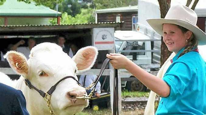 YOUNG FARMER: Zoe Mackay leading a charolais at the Nimbin Show.