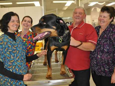 At the UQ Gatton campus are Moira Brennan and Dr Rachel Allavena with owners of Jackson the Rottweiler Mick and Jenny Lawrence. Jackson's terminal tumour disappeared after he was the first dog to trial an immune stimulating injection at the university.