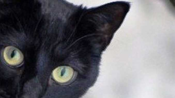 A black cat is a symbol of bad luck for those who are superstitious.
