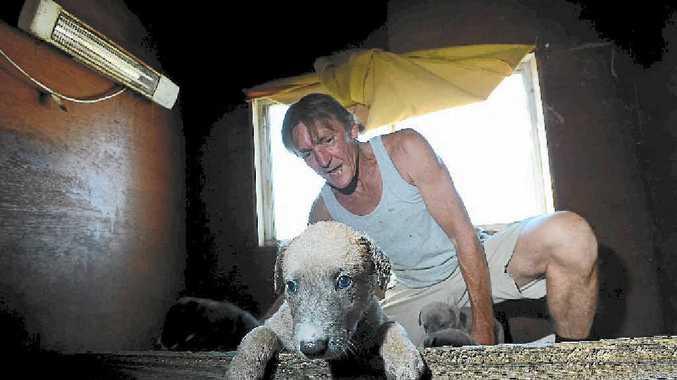 ADOPT A DOG: Lismore greyhound trainer Trevor Thompson is providing an adoption service for his retiring greyhounds.