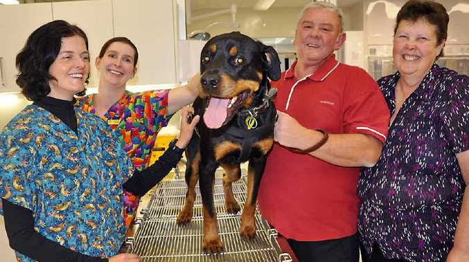 SECOND CHANCE: From the UQ Gatton campus is (from left) Moira Brennan and Dr Rachel Allavena with owners of Jackson the rottweiler Mick and Jenny Lawrence. Jackson's terminal tumour disappeared after he was the first dog to trial an immune stimulating injection.