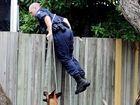 Police dog handler Senior Constable Brendon Dellow and Arkie, the belgian malinois cross dutch shepherd, search Kawungan backyards.