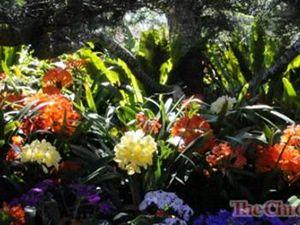 2013 Grand Champion garden